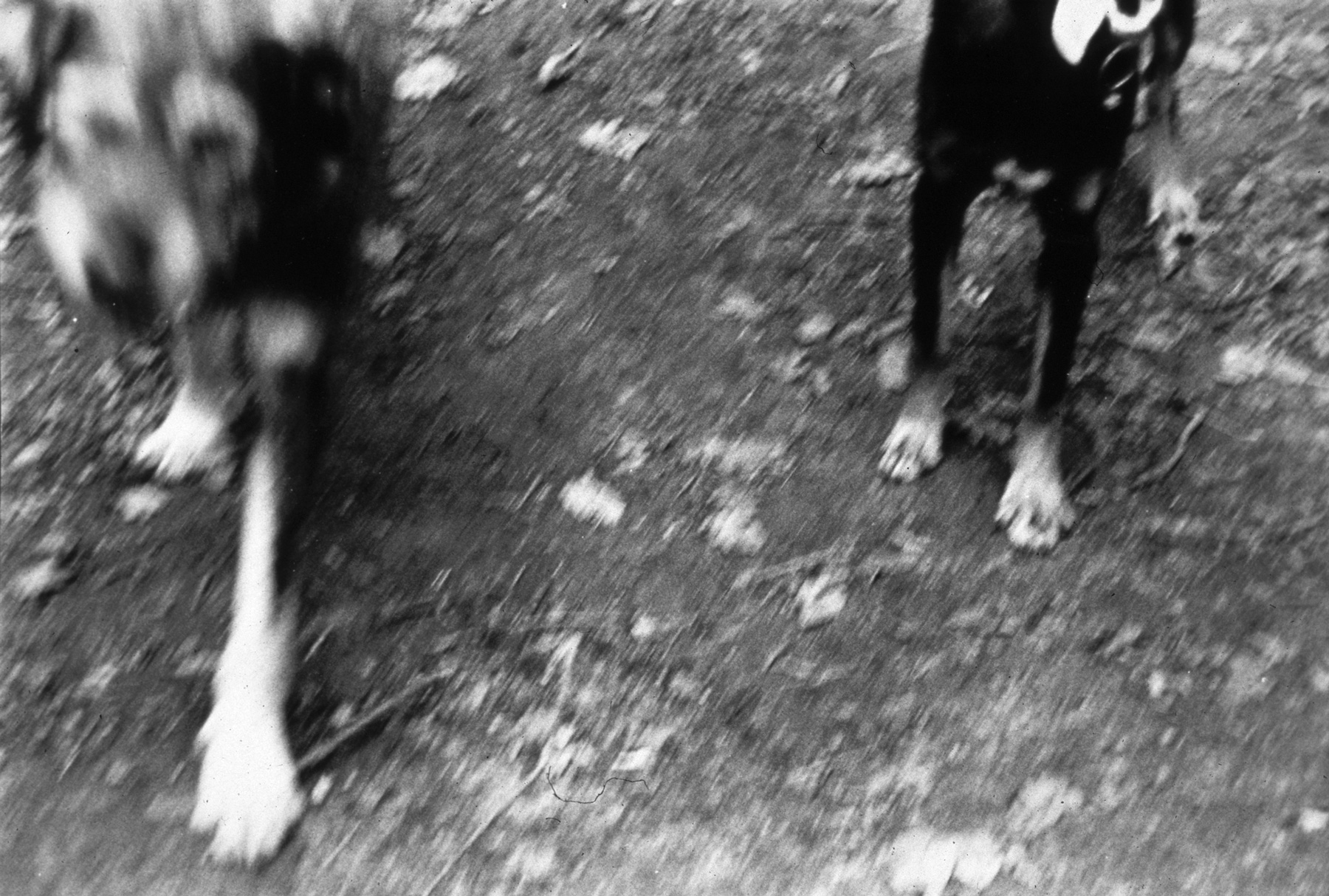 Dogs No.1