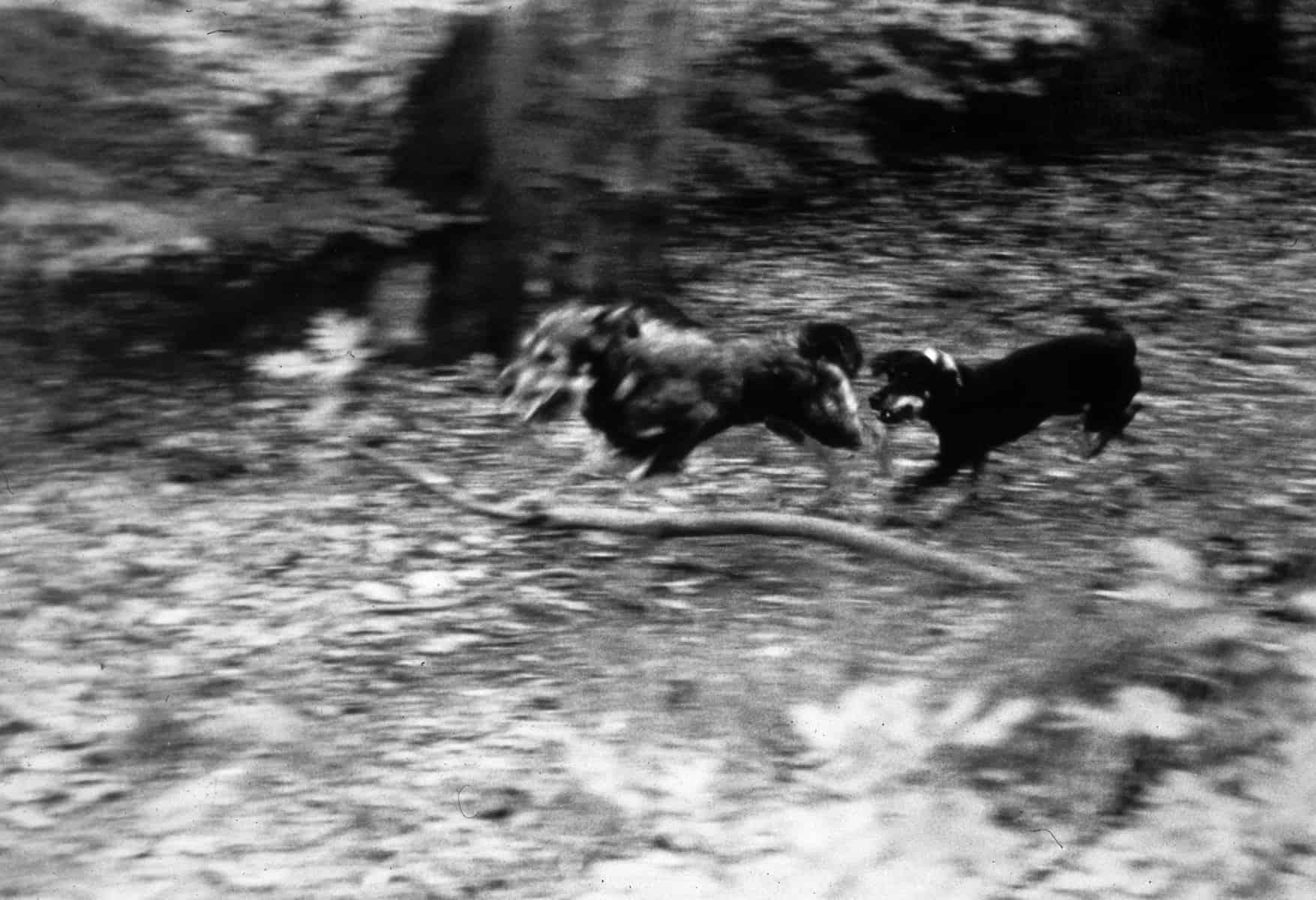 Dogs_No.3