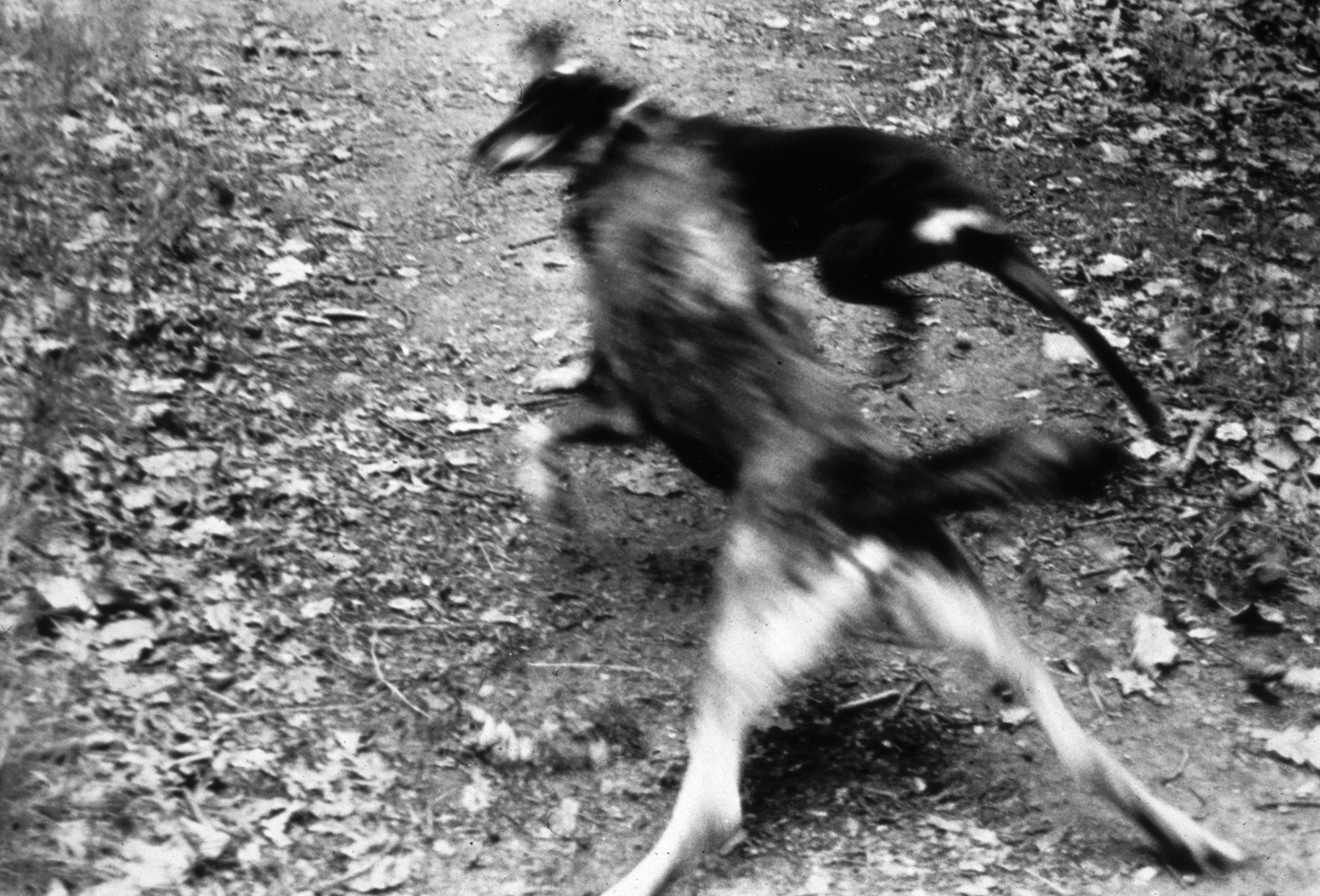 Dogs No.4