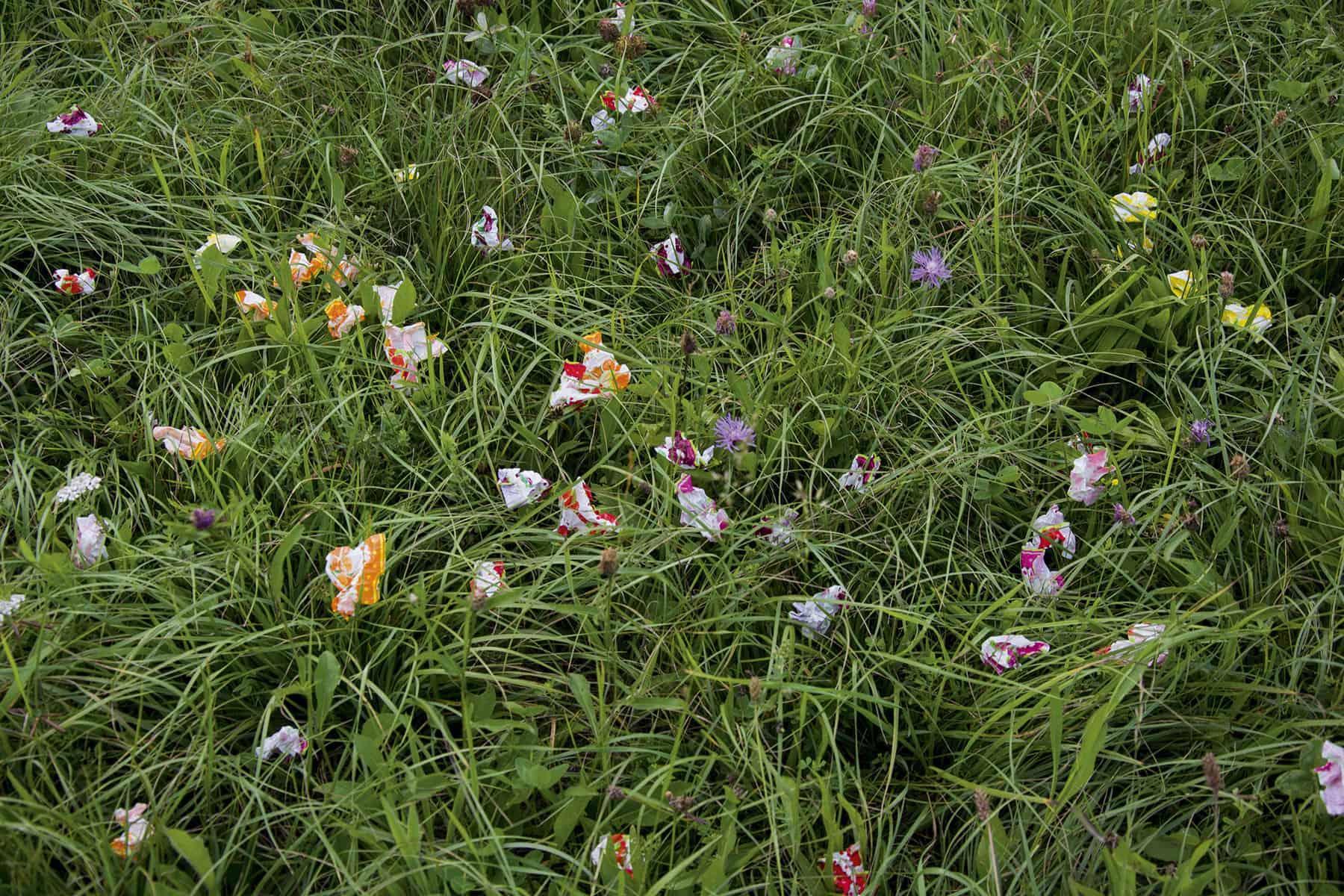 Wiesenblumen_1_Website