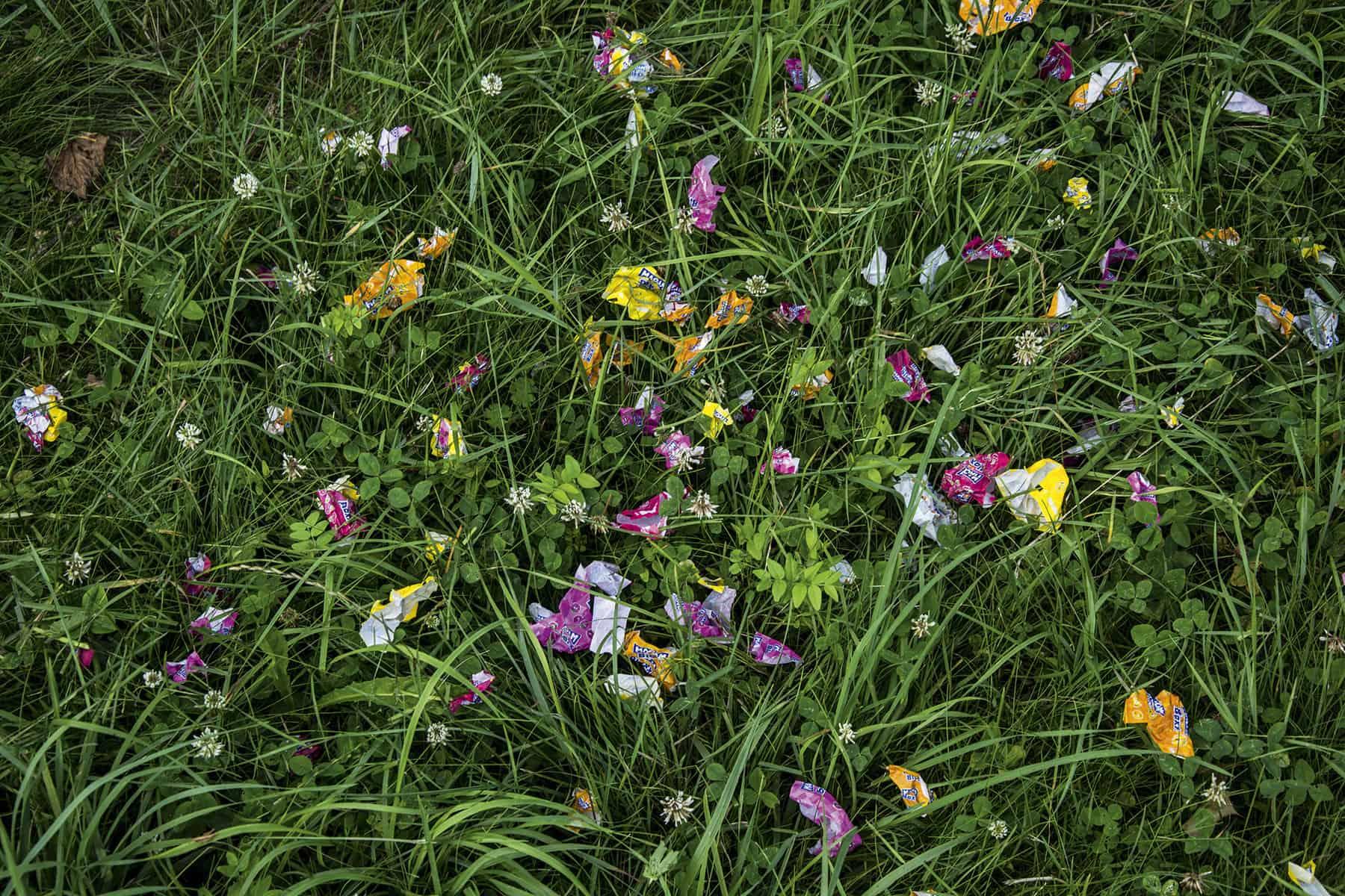 Wiesenblumen_2_website