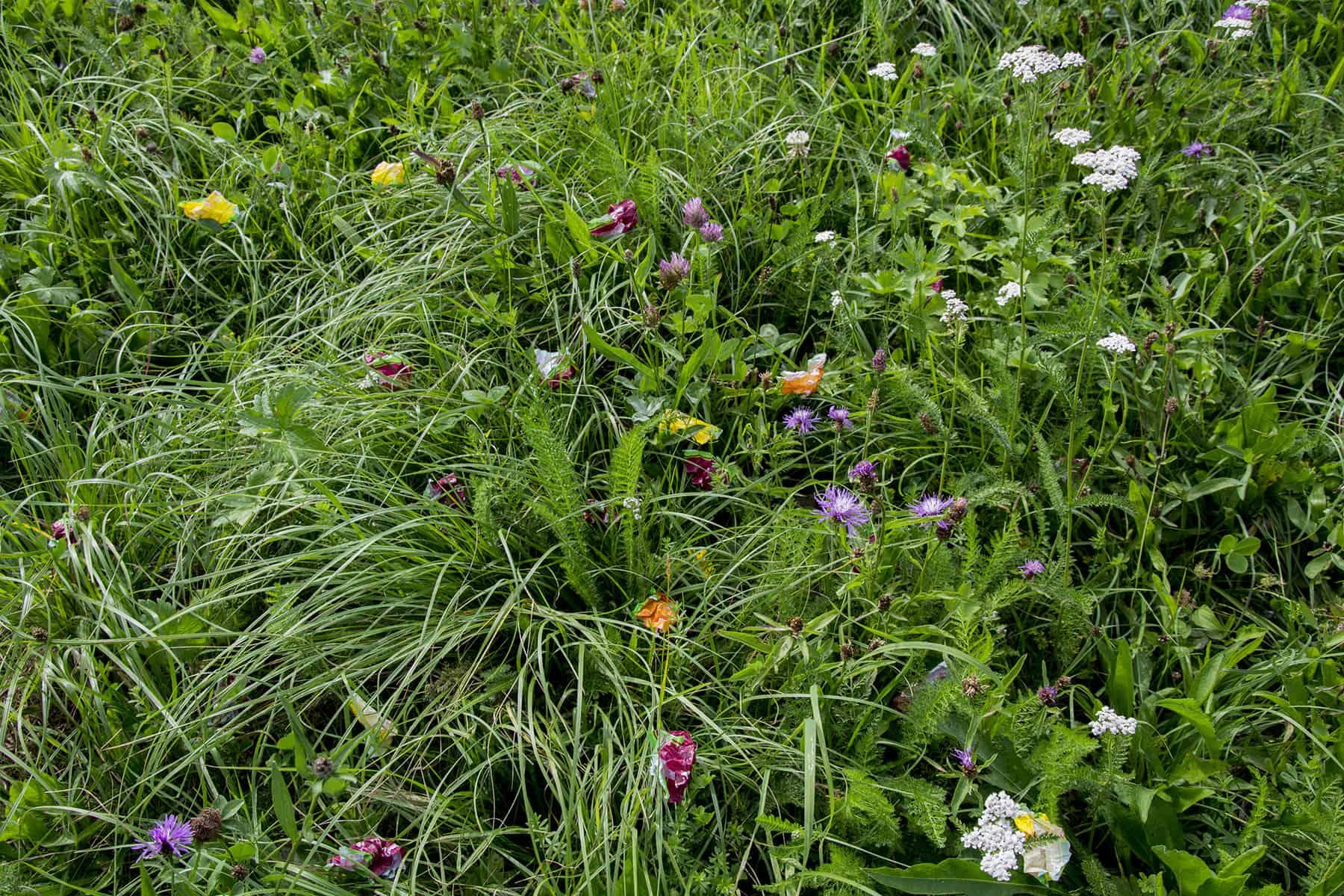 Wiesenblumen_4._website